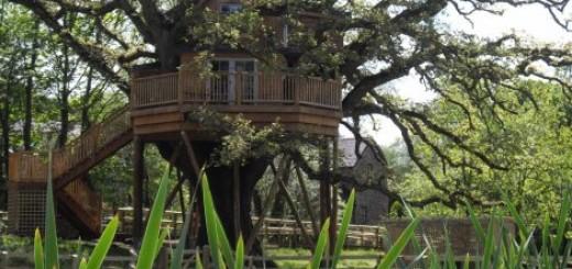 Luksuzna kućica na drvetu koja je udobnija od vašeg doma